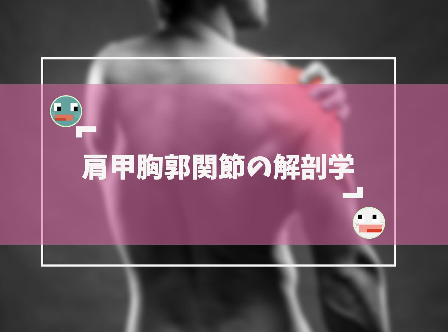肩甲胸郭関節の基礎解剖学