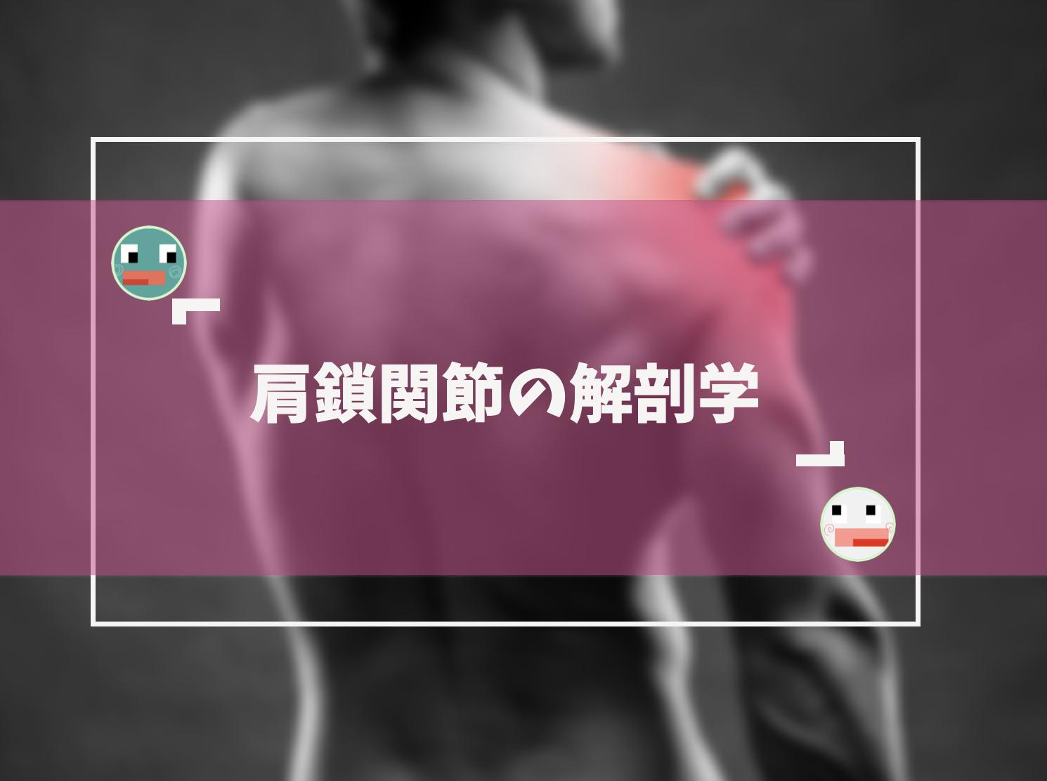 肩鎖関節の基礎解剖学